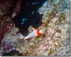 okinawa kerama diving919