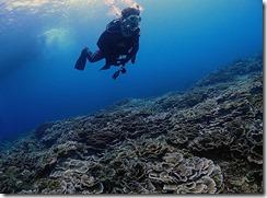 okinawa kerama diving920
