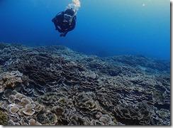 okinawa kerama diving921