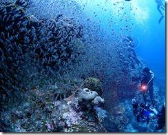 okinawa kerama diving923