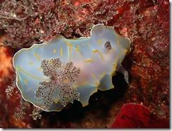 okinawa kerama diving926