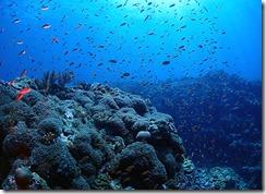 okinawa kerama diving941