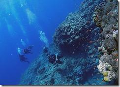 okinawa kerama diving943