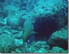 okinawa kerama diving945