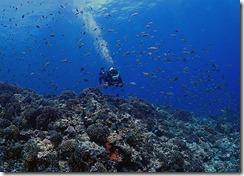 okinawa kerama diving950