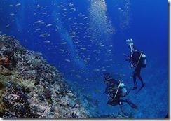 okinawa kerama diving951