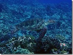 okinawa kerama diving953