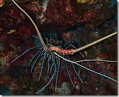 okinawa kerama diving954