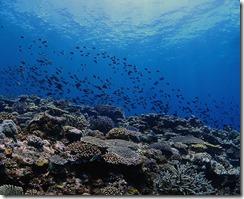 okinawa kerama diving955
