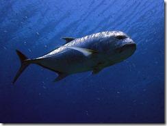 okinawa kerama diving958