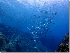 okinawa kerama diving960