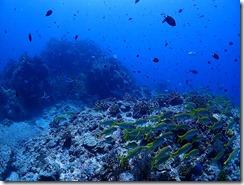 okinawa kerama diving961