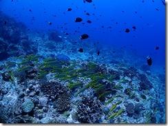 okinawa kerama diving962
