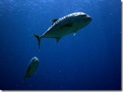 okinawa kerama diving963