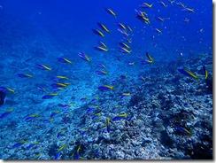 okinawa kerama diving964