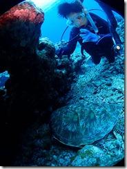 okinawa kerama diving972