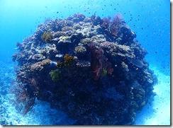 okinawa kerama diving973