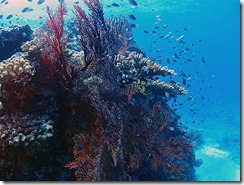 okinawa kerama diving974