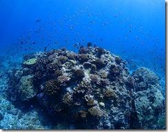 okinawa kerama diving975