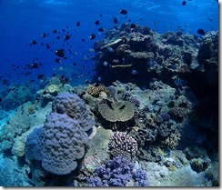okinawa kerama diving977