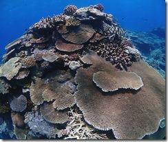 okinawa kerama diving978