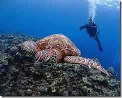 okinawa kerama diving988