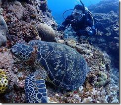 okinawa kerama diving989