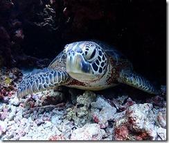 okinawa kerama diving990