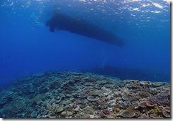 okinawa kerama diving992