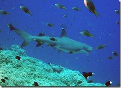 okinawa kerama diving997
