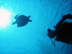 沖縄 卒業旅行 ダイビング
