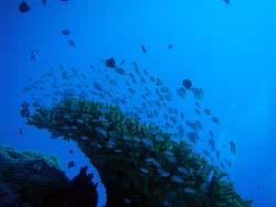 沖縄 ダイビング 慶良間体験ダイビング