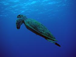 沖縄 ダイビング 慶良間1